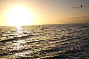 Ocean at sunset with flying swarm
